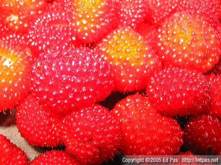close-up of Japanese raspberries