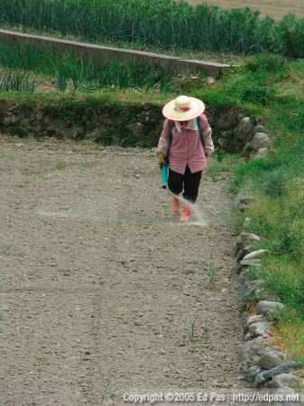 a woman spreading fertilizer on a field in Kokura Minami (front view)