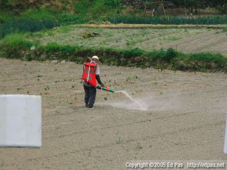 a woman spreading fertilizer on a field in Kokura Minami (back view)