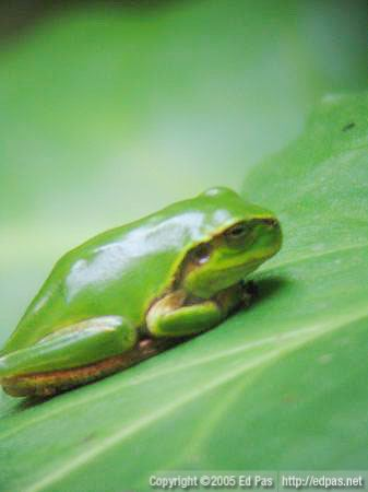 young frog sitting on a leaf