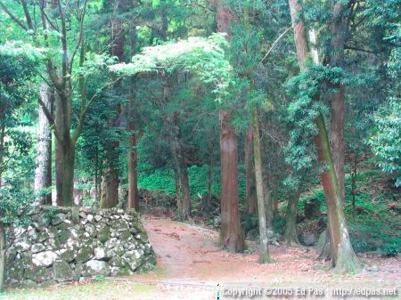 forest and paths on the right side of the shrine buildings