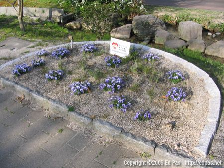 flower bed with purple-and-white flowers; creek in background